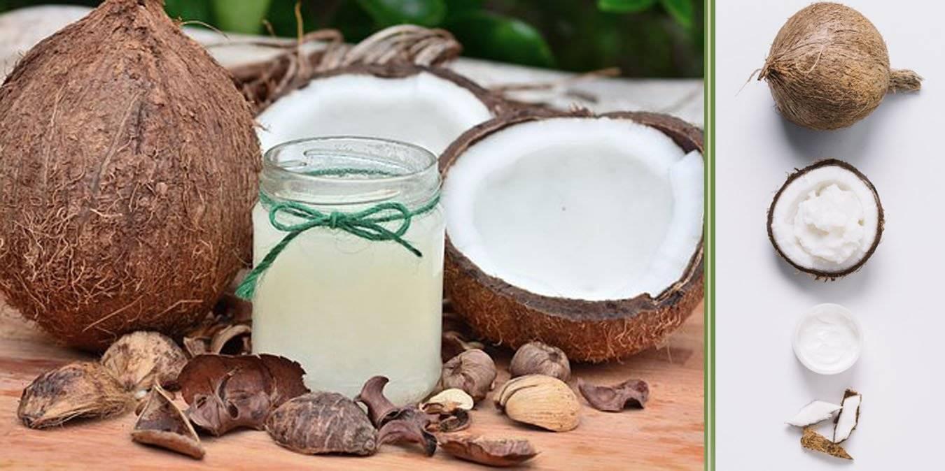 Olio di Cocco e i suoi innumerevoli benefici