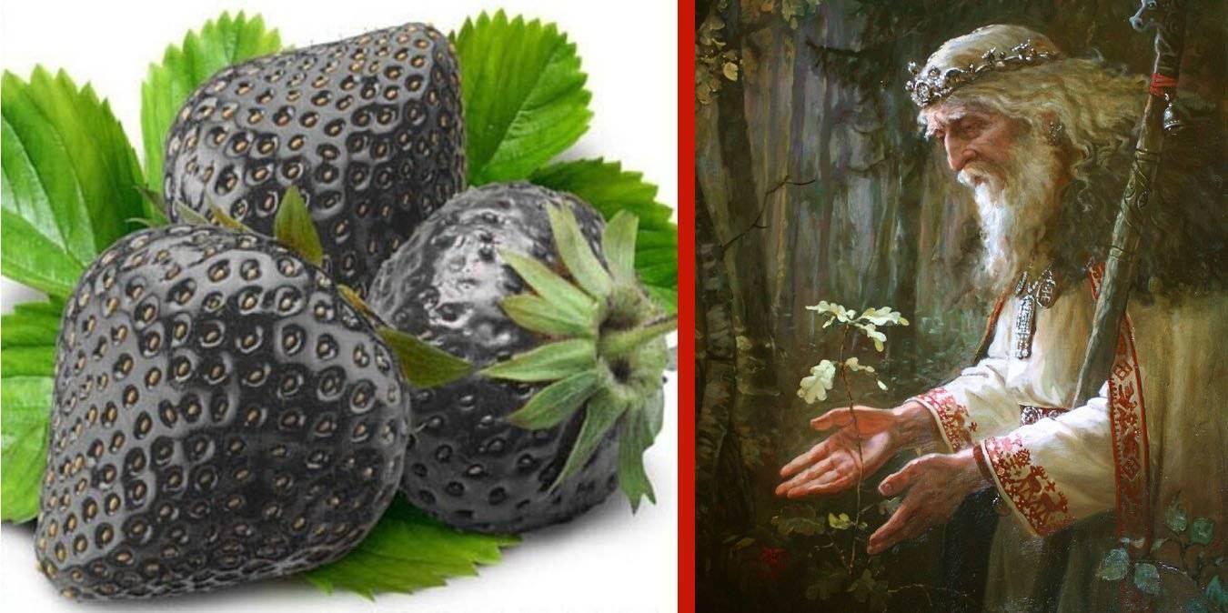 Fragole nere, dolcezza anticonformista dal sapore antico