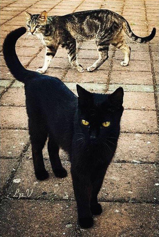superstizione il gatto nero porta sfortuna